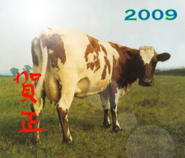 Pinkfloydusi2009