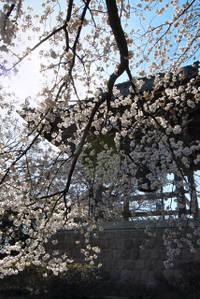 Sakura2008002